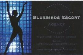 Bluebirds escorts Agency